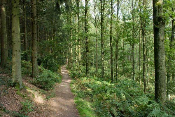 wandelen in het vijlener bos